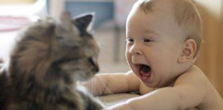 10 cose che non sapevate sui gatti