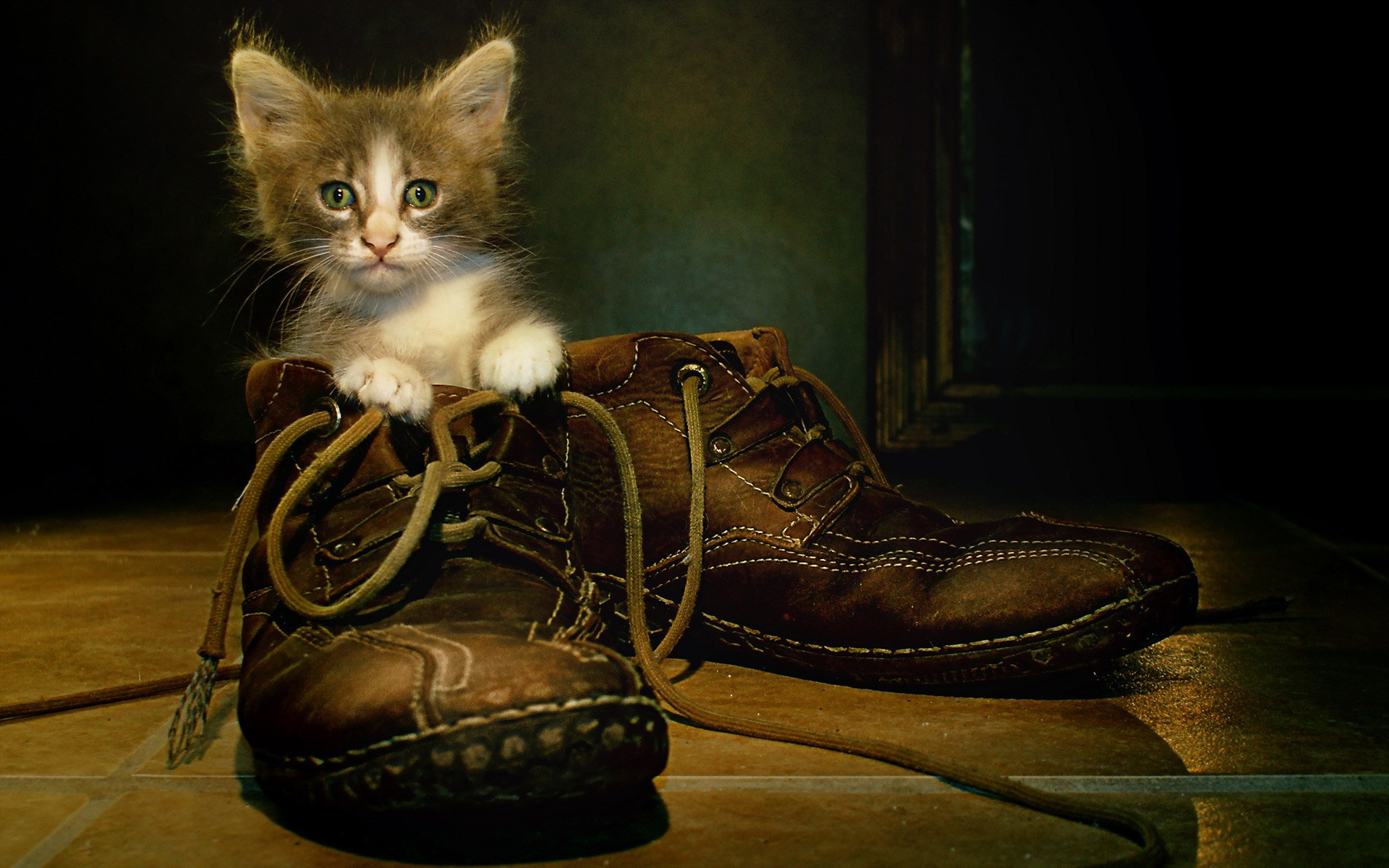cute-cat-in-big-shoes-hd-wallpaper