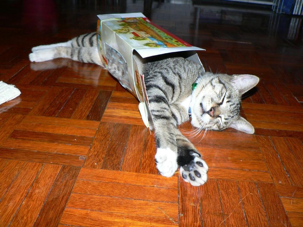 Cat-Box-Nap