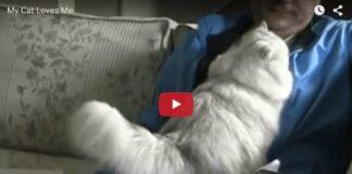 gatto miglior collega