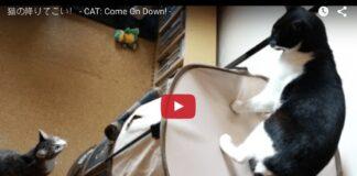 gatto non vuole scendere
