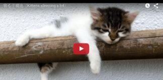 Gattini che dormono