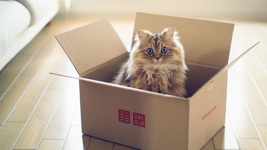 cat-box-ben-torode-cute-lovely-kitten-animal-floor-wallpaper-