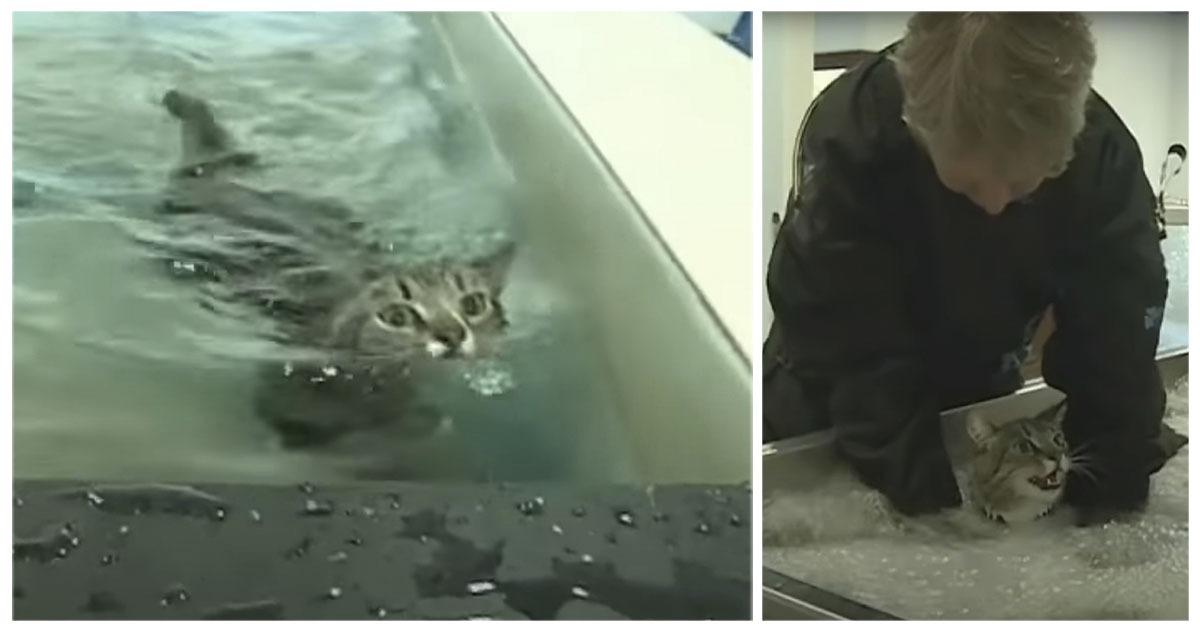 gatto paralizzato