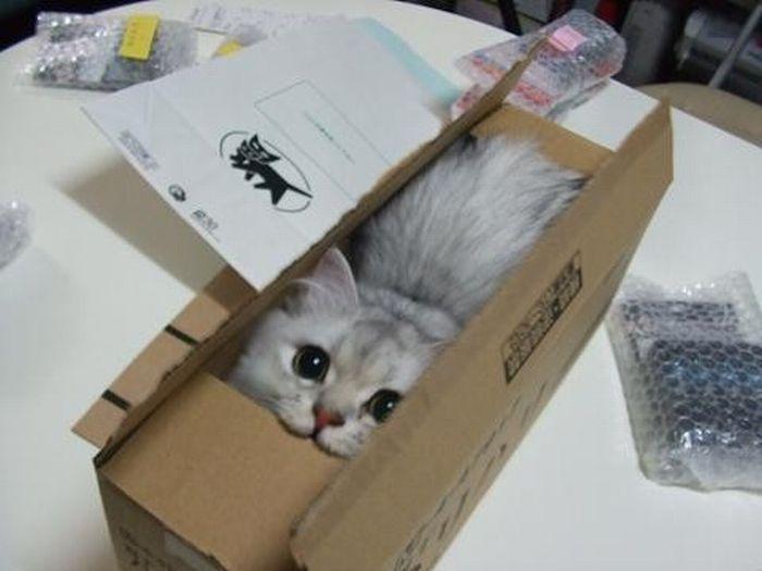 little-kitty-in-a-little-box