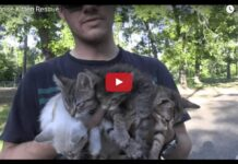 Quattro gattini salvati nel parco
