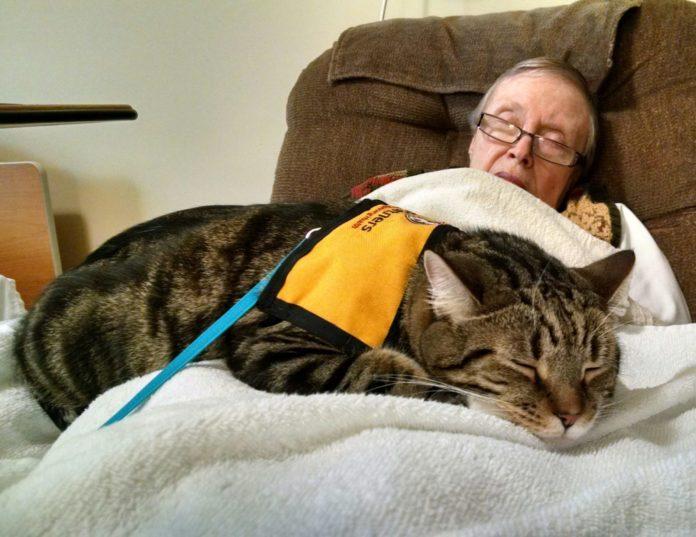 Gatti in ospedale