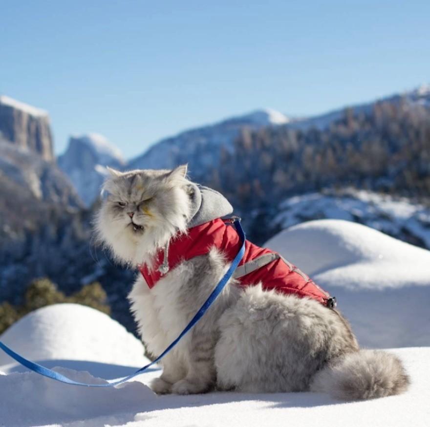 Gandalf gatto viaggiatore
