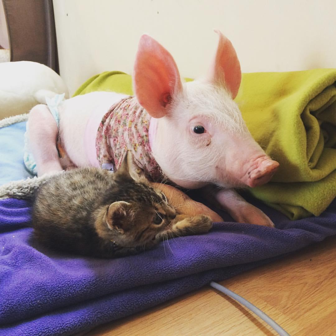 Laura e Marina, un'amicizia interspecie