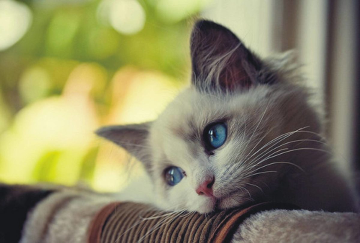 161147-cats-lonely-cat