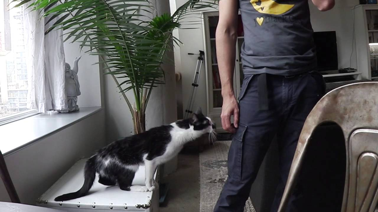 Kodi è proprio un gattino dispettoso