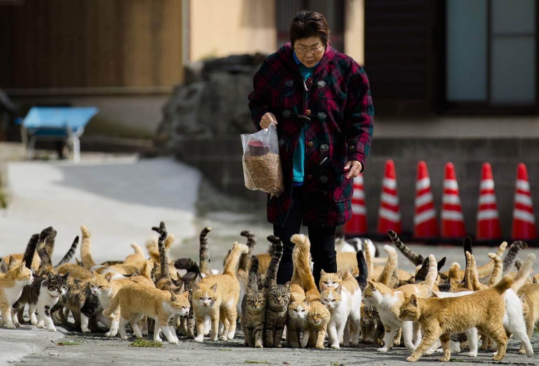 I gatti di Aoshima