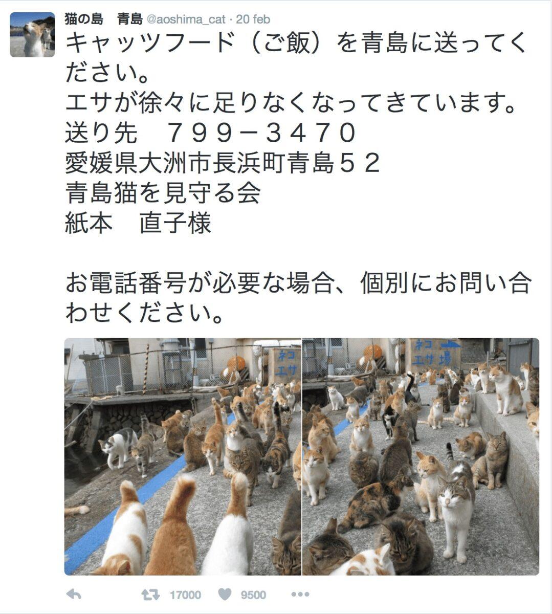 I gatti di Aoshima tritano per chiede delle pappe