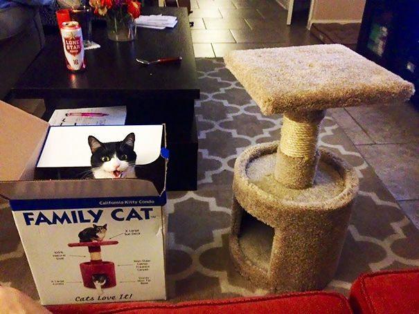 Logica dei gatti