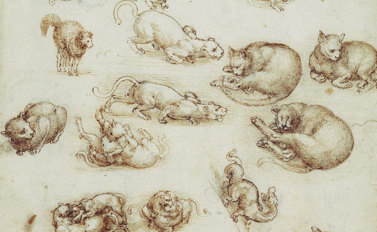 I gatti di Leonardo