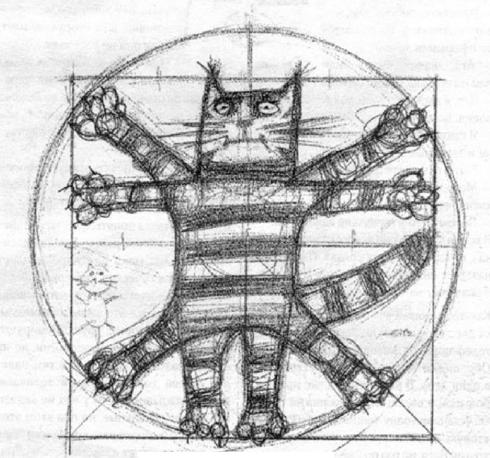 Gatto vitruviano