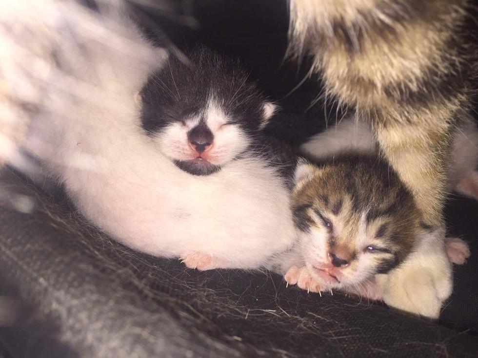 Gattini appena nati trovati in un borsone da hockey di un giocatore della squadra di Gwangyang