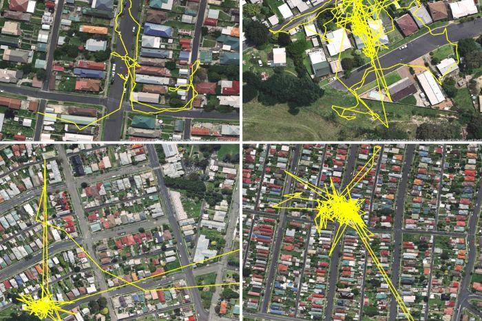 Mappe con il tracing dei gatti di Lithgow