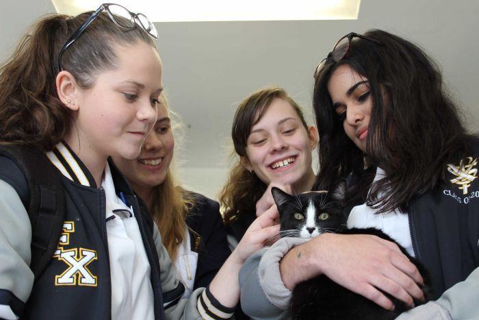 Studenti del college di Canberra con un gatto