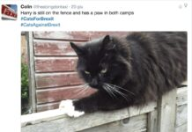 O di là o di qua. Questo gatto non ha ancora deciso dove mettere le zampe e come votare