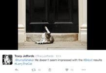 #Larrythecat