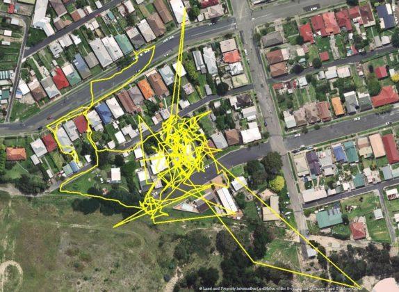 Tracking a Lithgow dei gatti locali