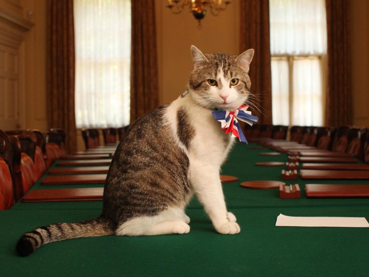 Larry, il gatto di Downing Street