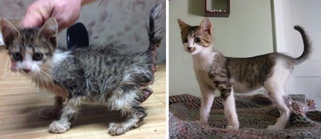 Gatti prima e dopo l'adozione