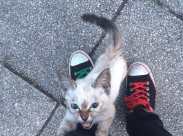 Gattina adotta la sua umana