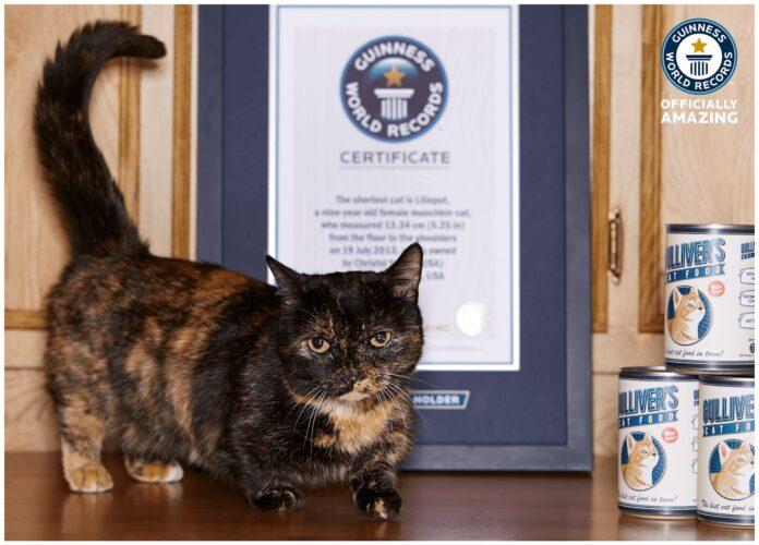 Lilieput, il gatto più corto al mondo