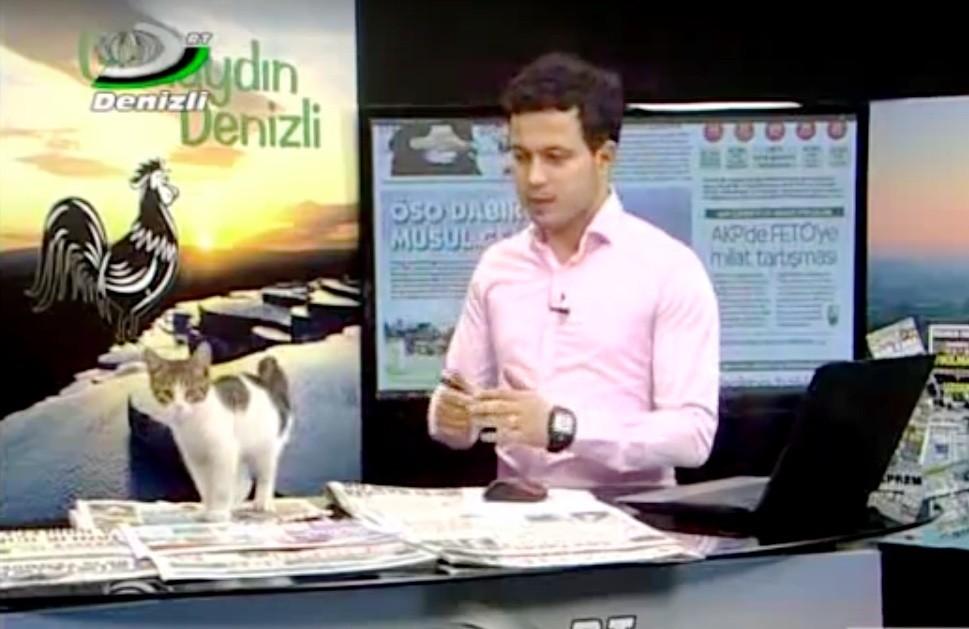 """Il presentatore Kudret Çelebioğlu riceve l'insolita visita di un gatto durante la diretta del programma """"Günaydın Denizli"""""""