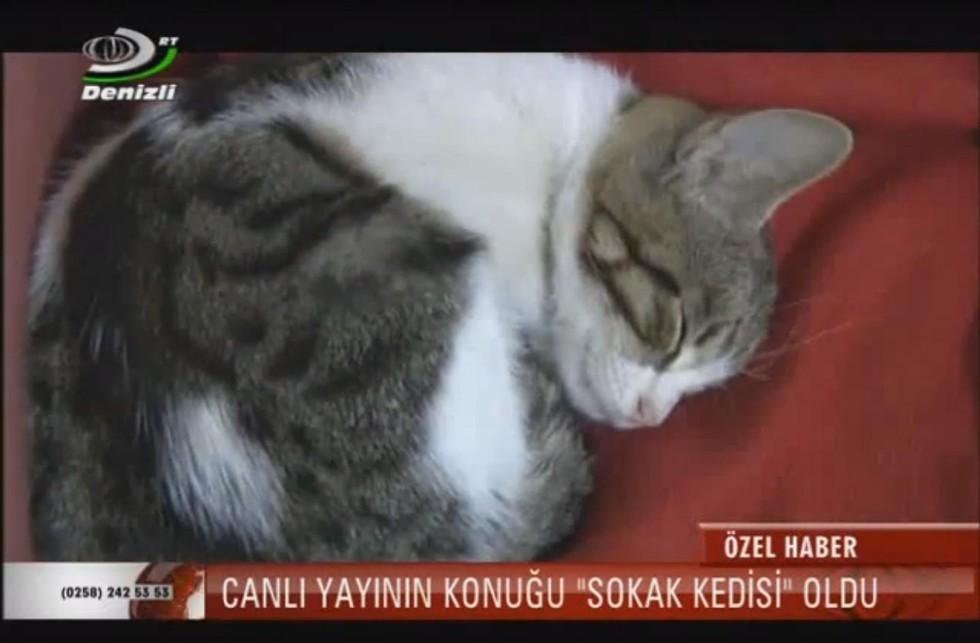 Il gattino, poco dopo la diretta, si riposa dopo essere stato a lungo sotto i riflettori