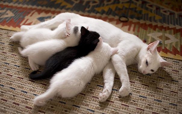 In ogni famiglia c'è una pecora nera. Ops, gatto.
