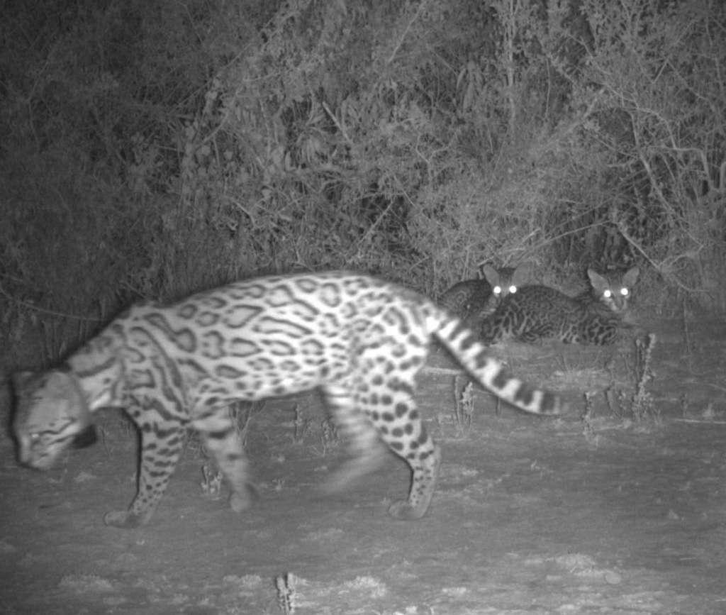 ©Laguna Atascosa National Wildlife Refuge