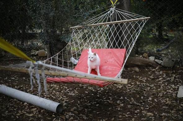 Un gatto del villaggio di Doyran si gode un po' di riposo su un'amaca