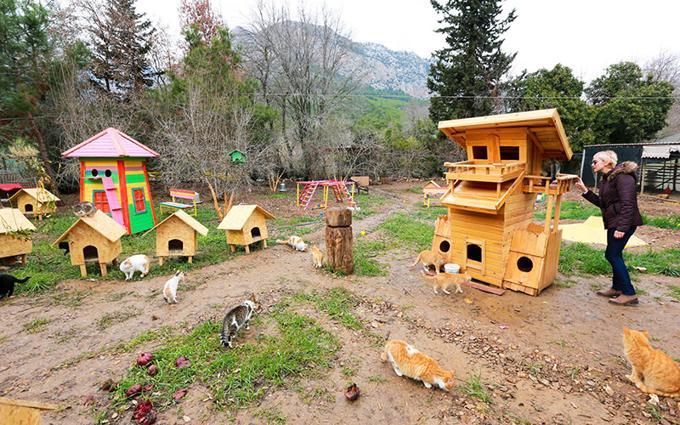 Il villaggio turco per gatti randagi nato