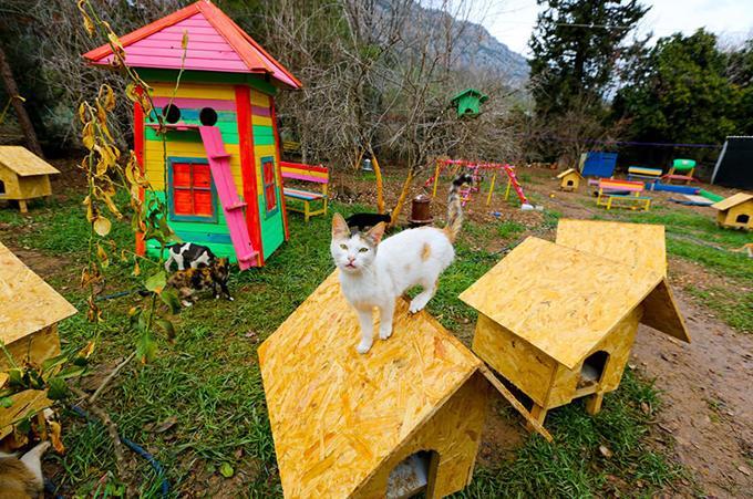 Il villaggio per gatti randagi costruito in Antalya