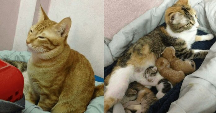 Il premuroso gatto Yello assite la mamma Tam The e i loro gattini