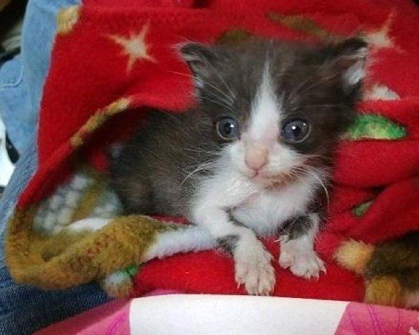 Gattino respinto dalla sua mamma trova conforto avvolto in coperta