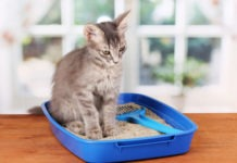 lettiera per gatti