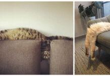 gatti che si allungano