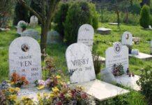 cimitero-animali