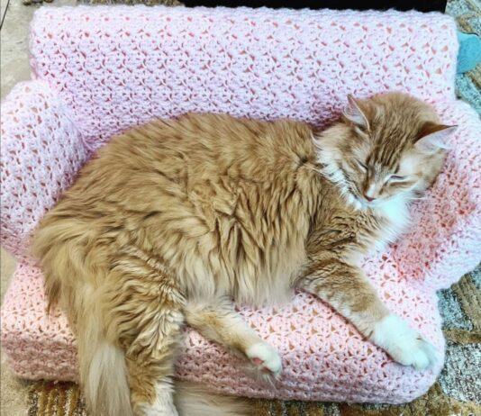 divanetto-gatto-uncinetto
