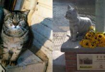 ettore-gatto-viareggio-statua