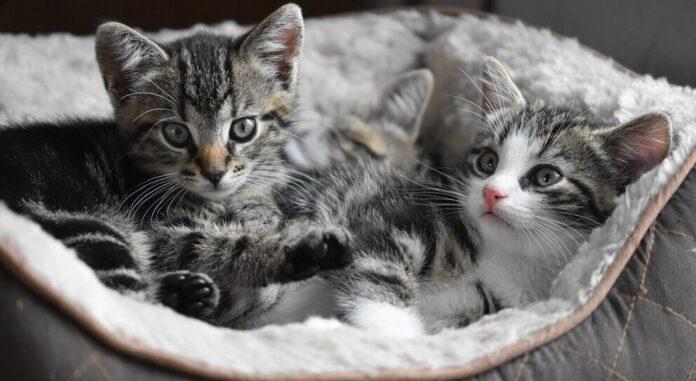 gattini-lockdown