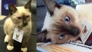 gattino-leon