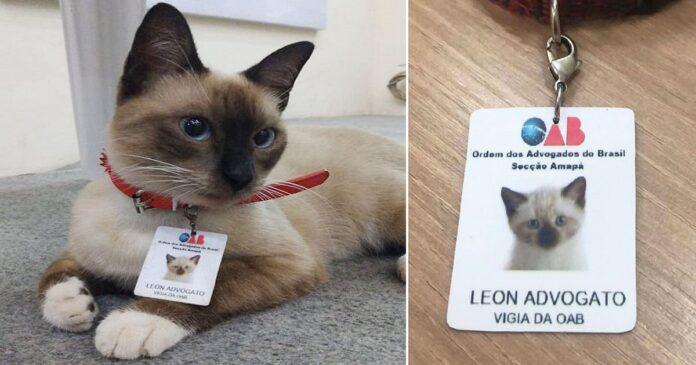 gatto-avvocato-brasile
