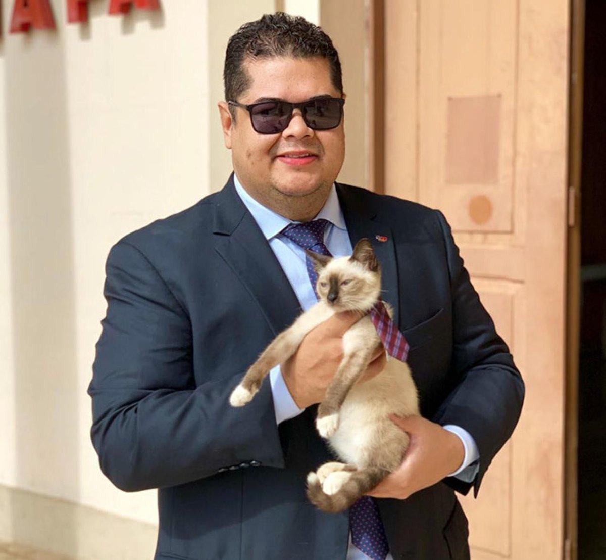 gatto-brasile-leon-avvocato