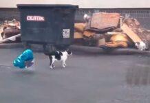 gatto-innamorato-palloncino