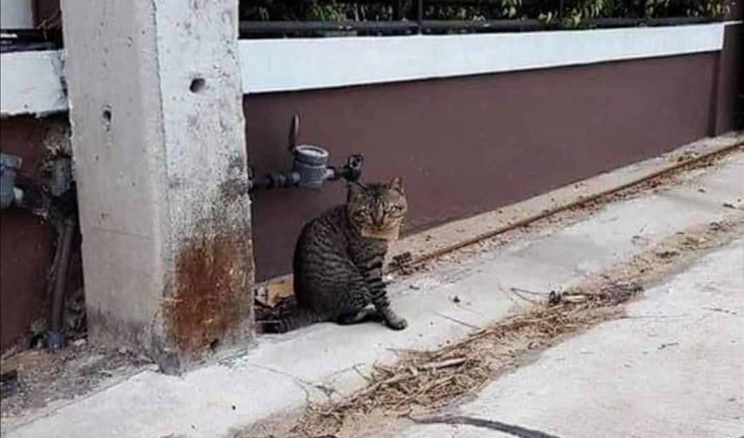 gatto-scontrino-thailandia
